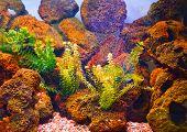 Underwater world with stones