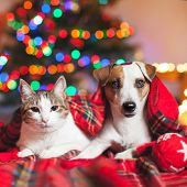 Cat and dog under a christmas tree. Pets under plaid poster