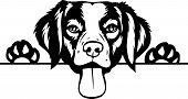 Animal Dog Rhodesian Ridgeback 6T6Ft Peeking.eps poster