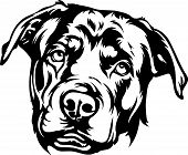Animal Dog Rottweiler 7.eps poster