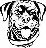 Animal Dog Rottweiler 7A.eps poster