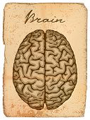 Human brain, old manuscript with illustration.