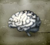 Human brain, old-style vector
