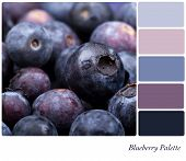 Fresh blueberry background colour palette with complimentary swatches.