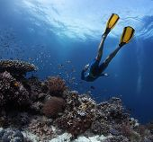 Freediver gliding underwater over vivid coral reef. Original colors