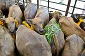stock photo of slaughterhouse  - People in Thailand donate the money to the slaughterhouse - JPG