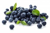 Blueberry antioxidant superfood geïsoleerd op wit