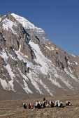 picture of jainism  - Holy Mount Kailash in Tibet and yak carrying supplies - JPG