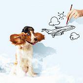 Lustige Spaniel Hund