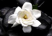 White gardenia flower with therapy stones