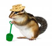 stock photo of hillbilly  - Funny chipmunk with straw hat and shovel farmer concept - JPG