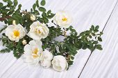picture of climbing roses  - White climbing rose on a wooden table - JPG