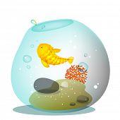 Fish bowl, aquarium with blue fish.