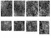 8 Fingerprint Crops