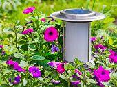 Lámpara de jardín solares sobre fondo de flor.
