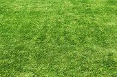Achtergrond van een veld groen gras.