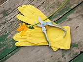 Yellow Rubber Gloves, Lily And Garden Pruner On Wooden Background. Closeup.