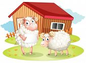 Illustration of a sheep holding an empty signage at the back of the barn on a white background