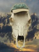 Horse Skull With Cap
