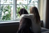 foto of dog-house  - Little girl and her dog looking out the window - JPG