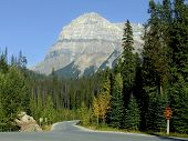 Scenic Road Leading To Emerald Lake, Yoho National Park, Canada