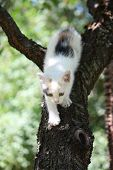 Cute White Kitten Climbing Down From The Tree