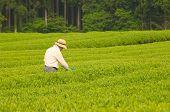 The Tea Farmer