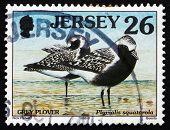Postage Stamp Jersey 1998 Grey Plover, Pluvialis Squatarola, Bir