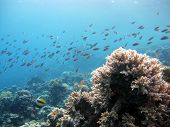 Fish over soft coral
