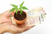 Money And Plant In Hands