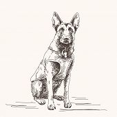 Sketch of Belgian Shepherd dog, Hand drawn illustration.