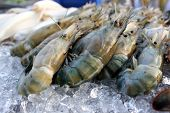 image of tiger prawn  - Many Black tiger prawn freeze with ice - JPG