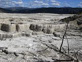 picture of mammoth  - Minerva Terrace at Mammoth Hot Springs in Yellowstone National Park - JPG