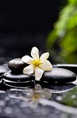 image of gardenia  - Spa still with gardenia flower on pebbles reflection - JPG