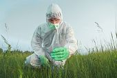 Scientist Agronomist Examines Green Plant