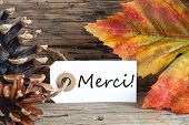 Fall Background With Merci Label