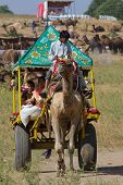 Pushkar, India - November 18: Decorated Camel And His Owner Are Going To Take Part At Annual Pushkar