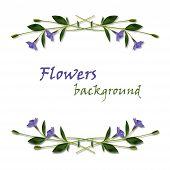 Periwinkle Flowers Frame