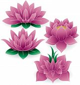 Lotus Flower Colored