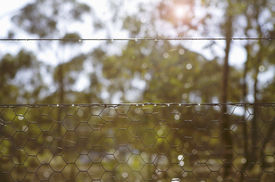 picture of chicken-wire  - Backlit morning sunshine in bush setting looking through chicken wire fence - JPG