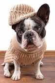 French bulldog wearing warm sweater and hat