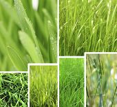 Nature collage. Macro grass with water drops