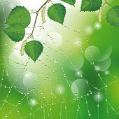 Spider web with dew and leaves of birch. Nature background