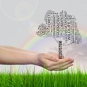 Concept or conceptual black ecology text word cloud tree in man or woman hand on rainbow sky background and grass