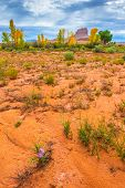 Wild Desert Flowers Fall Foliage And Wild Horse Butte Utah Landscape Vertical Composition