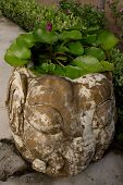 stock photo of planters  - stone planters-elephant Bush water plants is in the sand ** Note: Shallow depth of field - JPG