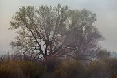 Beautiful Fog On A River Photo