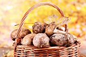 Wild mushrooms and autumn leaves in basket on bright background