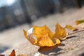 Beautiful autumn leaves on road