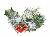 Holly leaves and berries with a pine branch on a white background